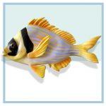 df10-porkfish-hospital-art-wall-murals-fish