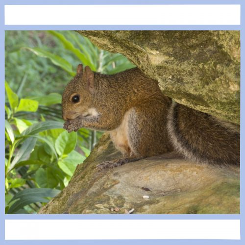 squirrel hiding out